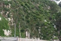 castellana_2011_4